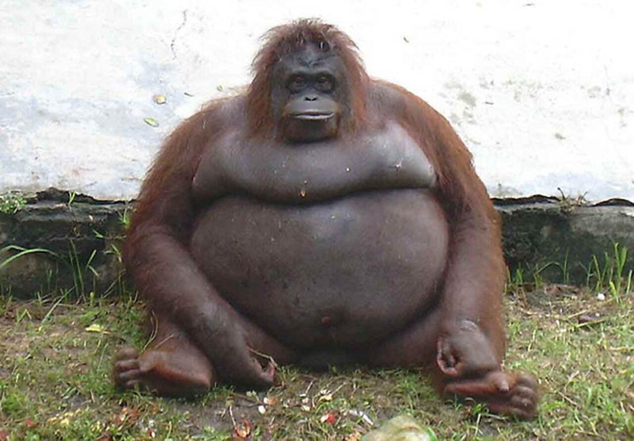 Жирные люди фото смешные 3