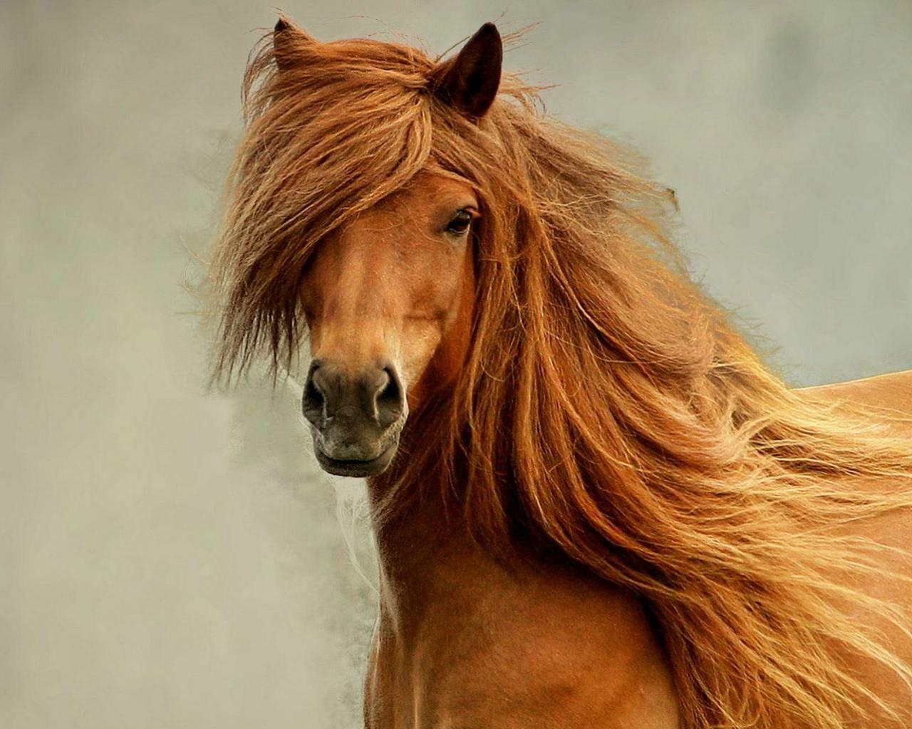 Насевере столицы  изконюшни похитили вязаные шапочки для лошадей