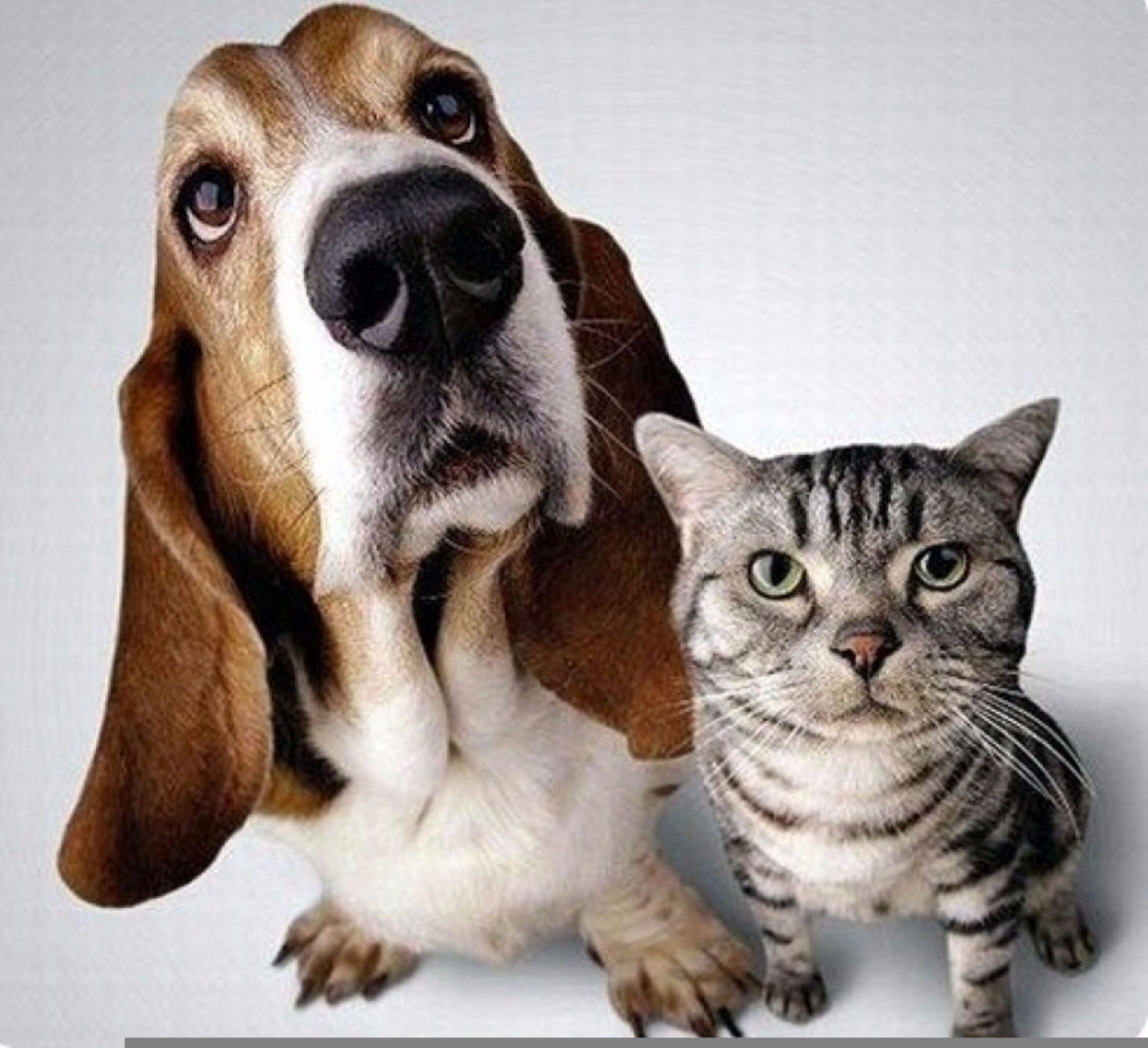 Должника поалиментам сдали домашние животные