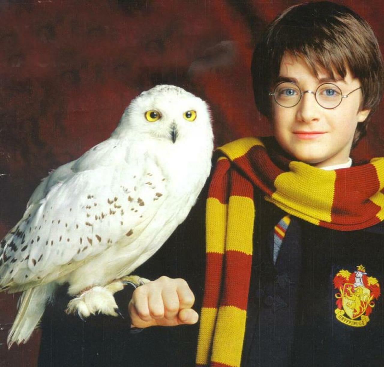 Книги оГарри Поттере привели к уменьшению числа сов— Исследование