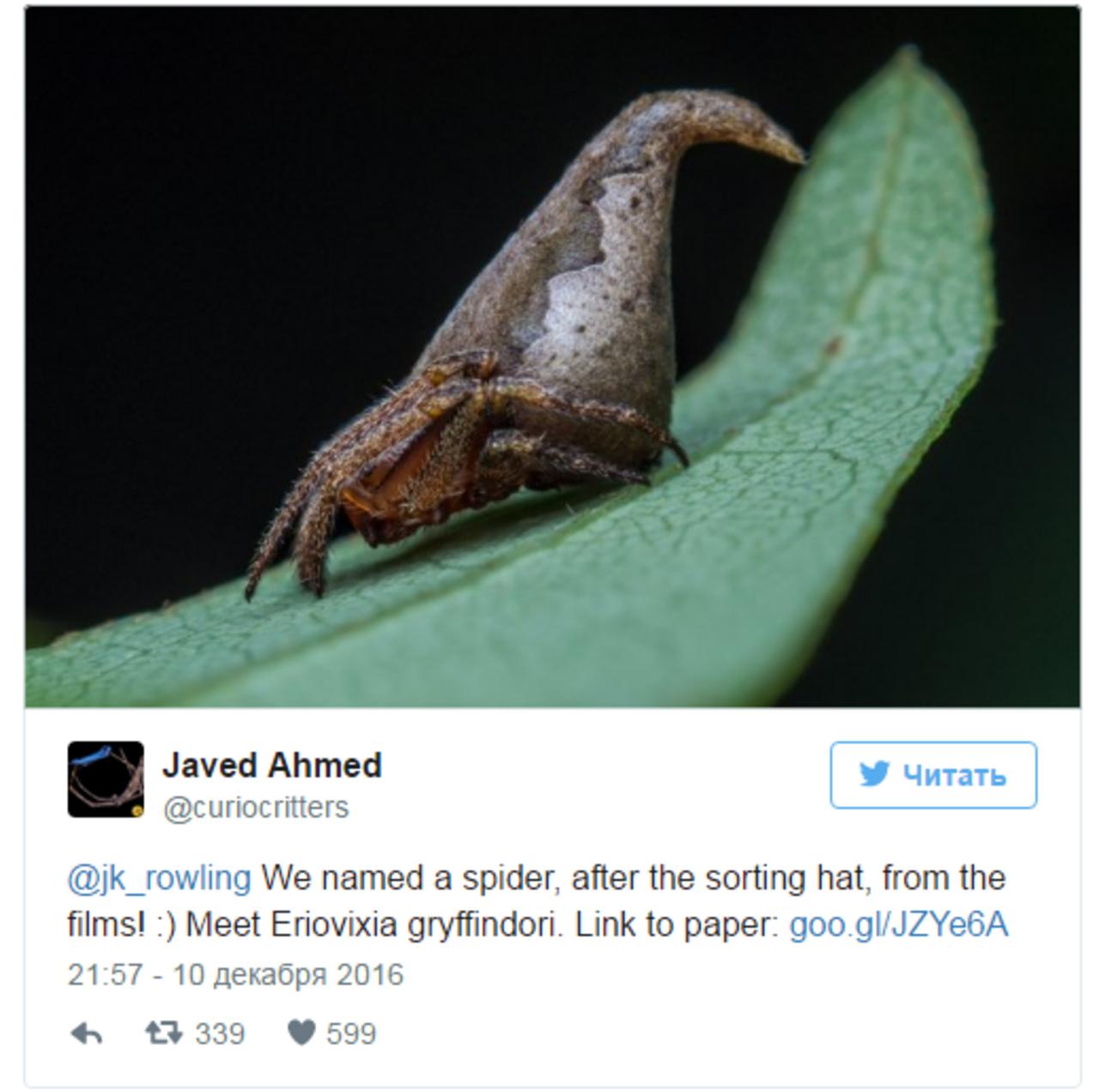 Новый вид индийского паука назвали вчесть шляпы из«Гарри Поттера»