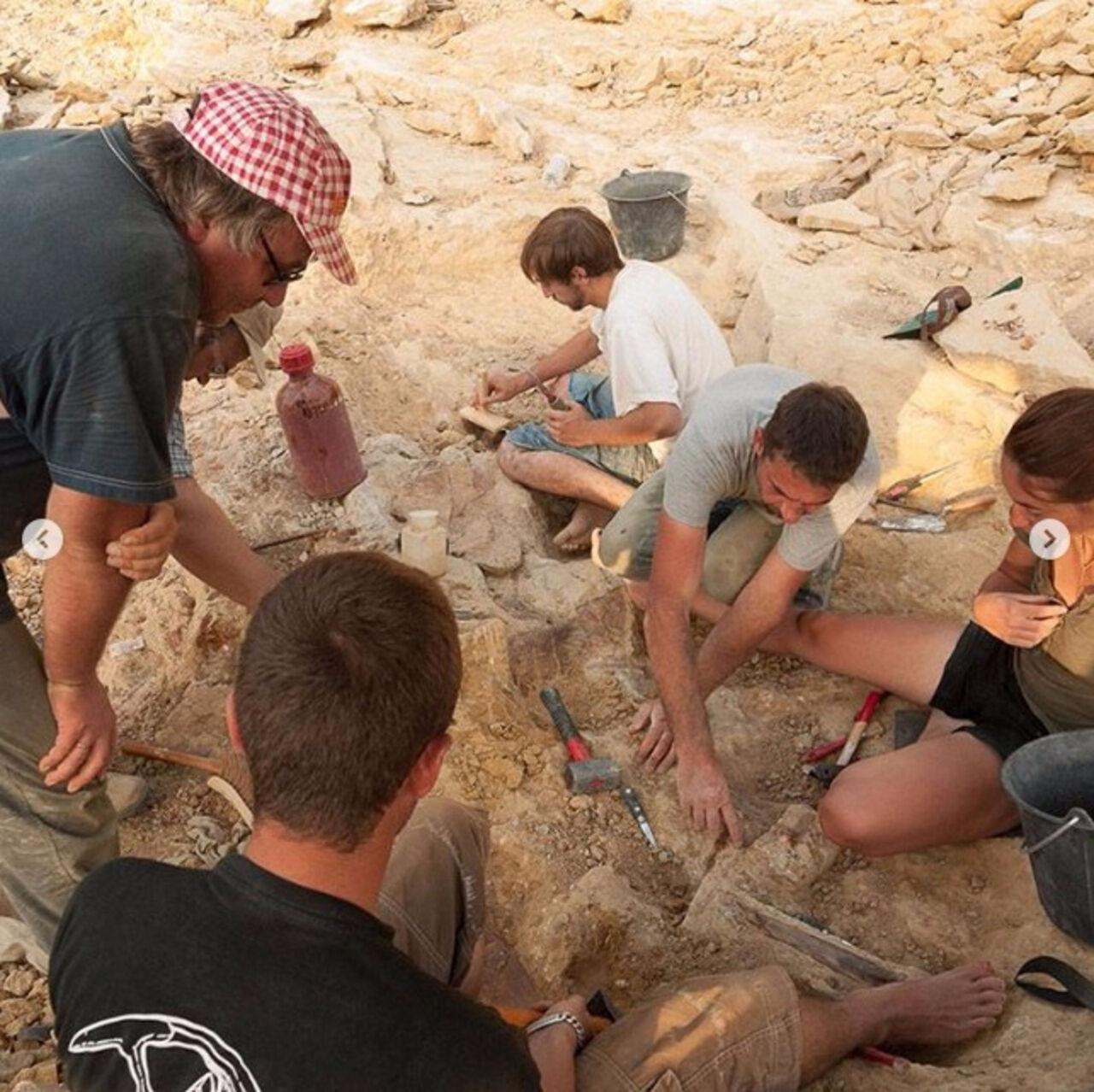 Ученые обнаружили непривередливых динозавров воФранции