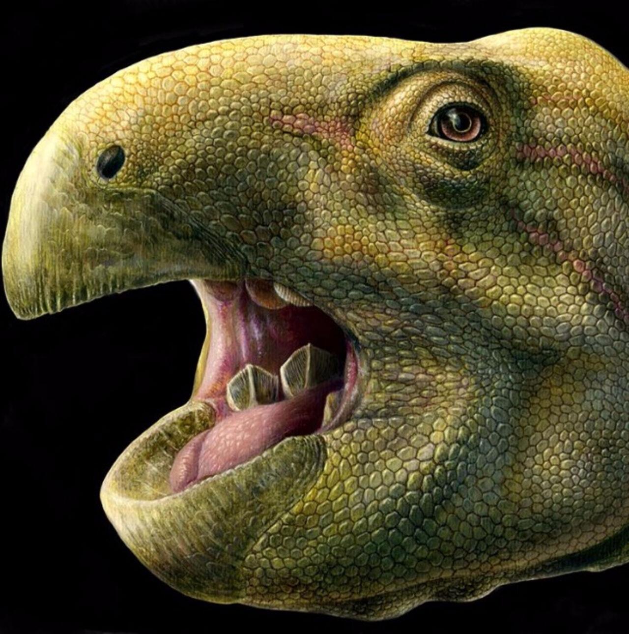 ВоФранции археологи отыскали новый вид динозавров