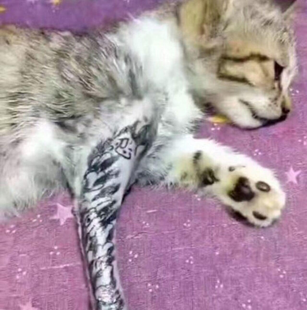 Юзеры социальных сетей прокляли мастера, который сделал тату котёнку
