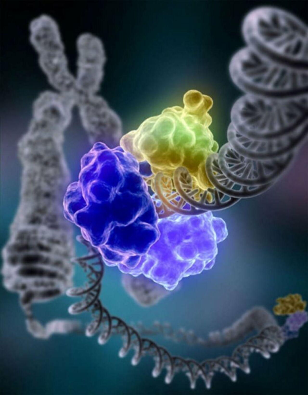 Ученые: Найден белок, который недает вирусам размножаться ворганизме