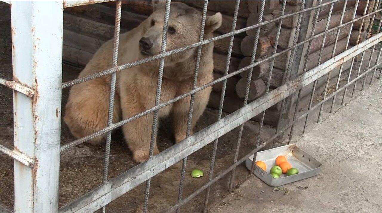 Медведь чуть не умер, когда вспыхнул двор дома, где проживал его хозяин