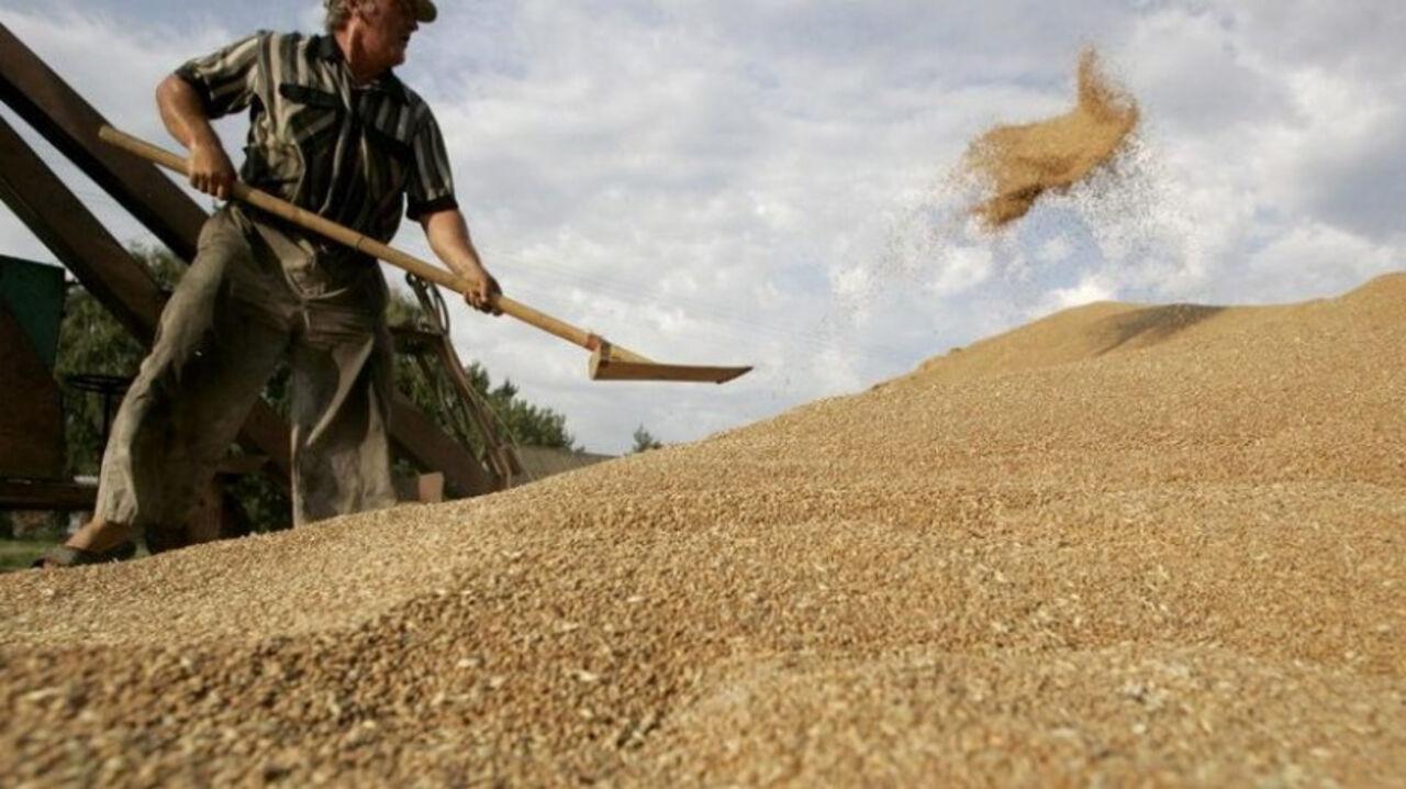 Мыпросто заменим Турцию для русского  экспорта зерна— ВМинсельхоз