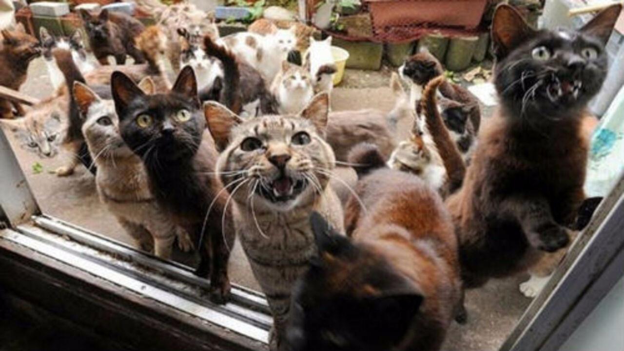 Женщина заперла в квартире 30 кошек и оставила животных без еды и воды. Через некоторое время животные умерли сообщает РИА'Оренбуржье