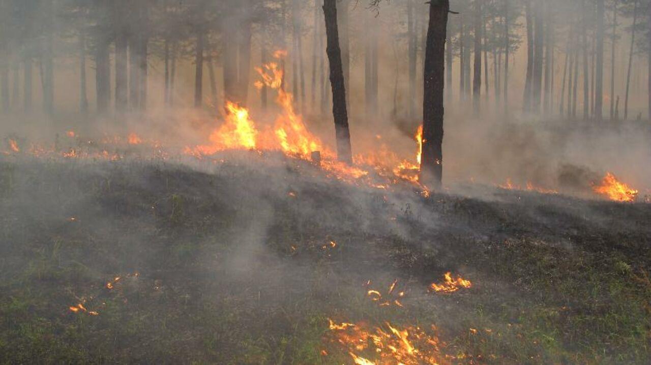 ВБурятии задержали подозреваемого ввозникновении лесного пожара
