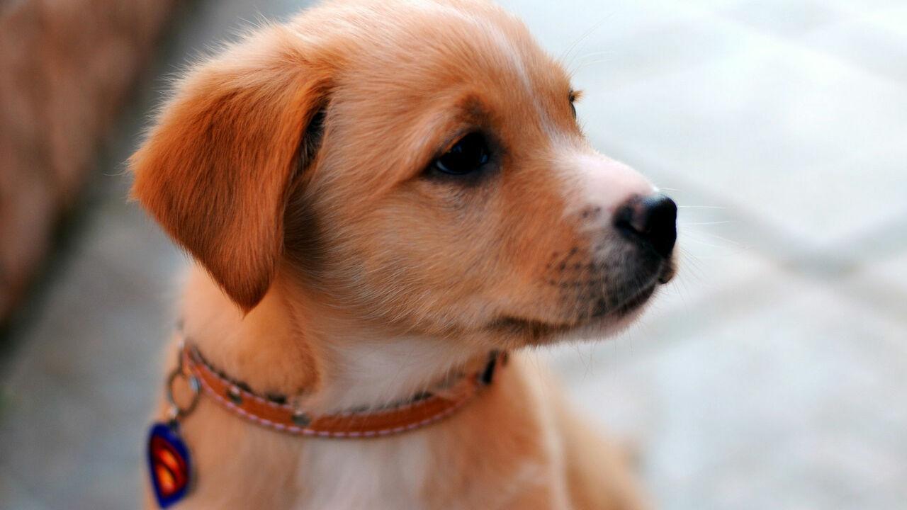Американские учёные пришли к выводу что люди неправильно сопоставляли возраст собаки и человека и рассказали как это должно быть