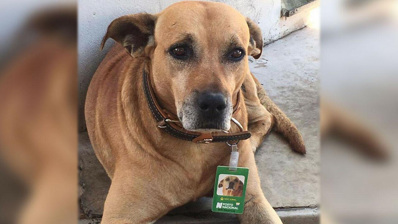 ВБразилии бездомного пса признали лучшим сотрудником здешней  АЗС