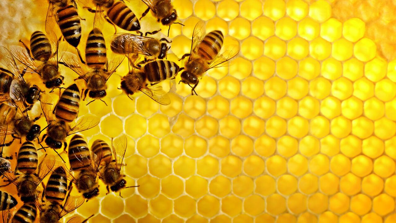 Из-за холодного лета мёд в РФ может подорожать вдвое
