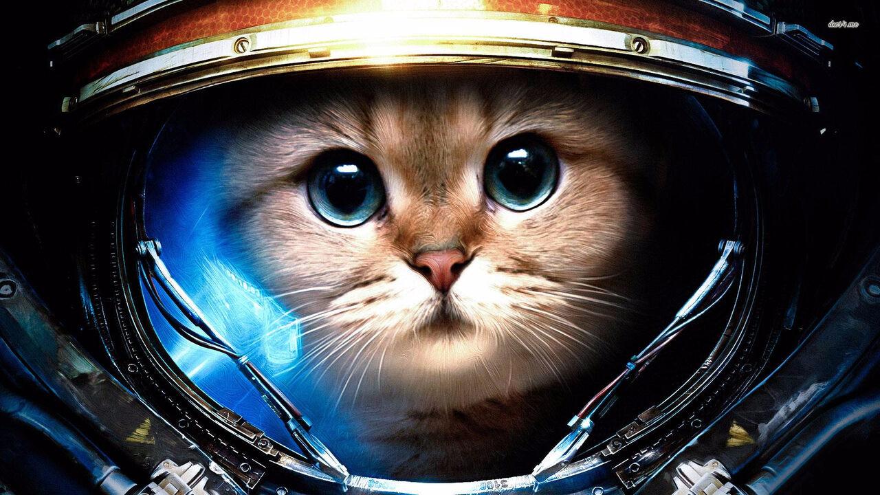 Большинством голосов ученые дали кошачьи имена объектам вокруг Сатурна