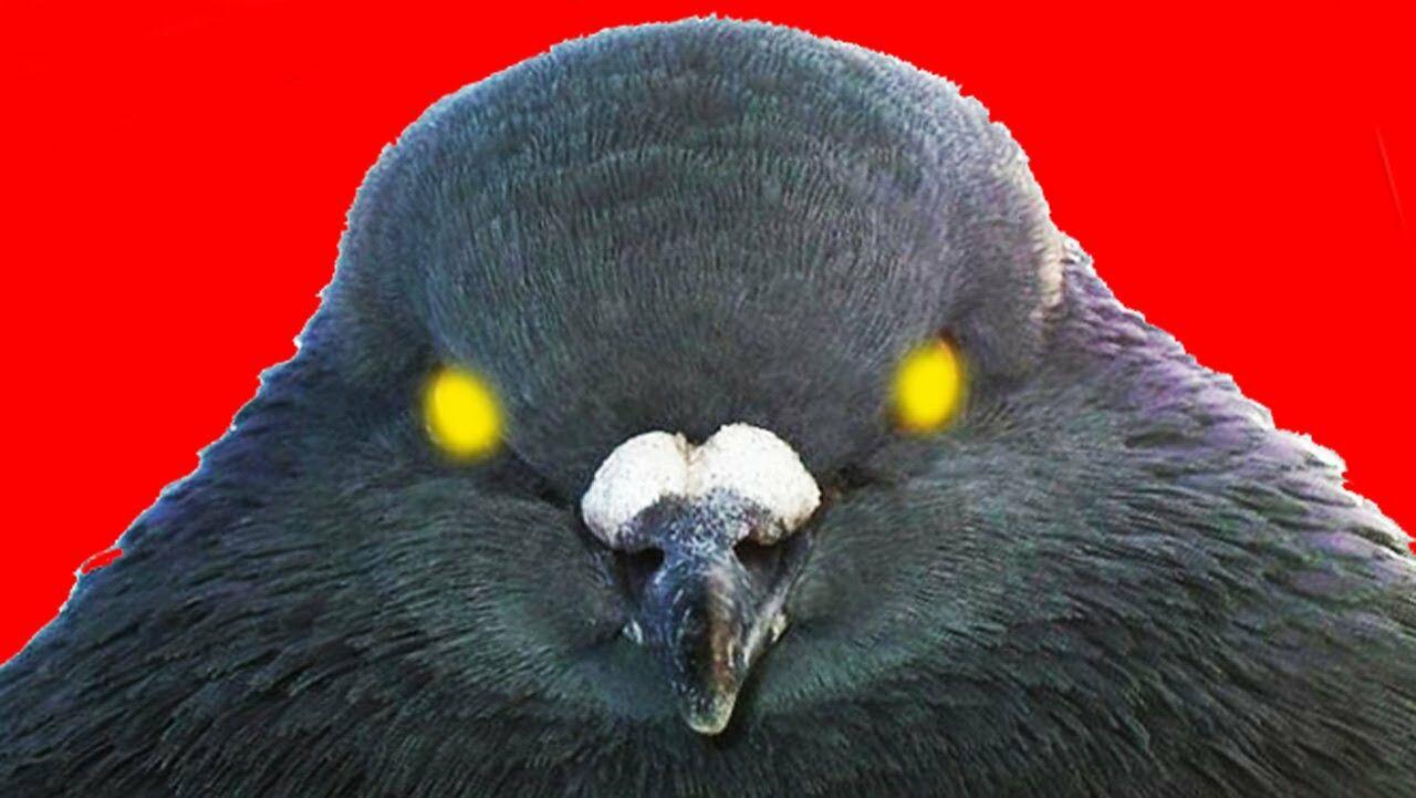Дети покормили голубей, аихмать получила штраф заразбрасывание мусора