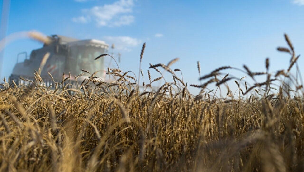Турция отменила ограничения напоставки русской пшеницы