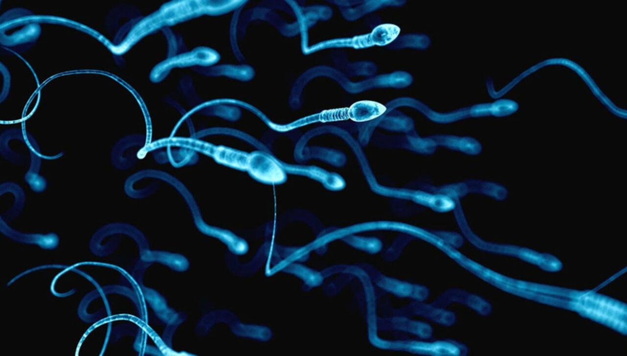 Учёные нашли способ лечения рака с помощью сперматозоидов