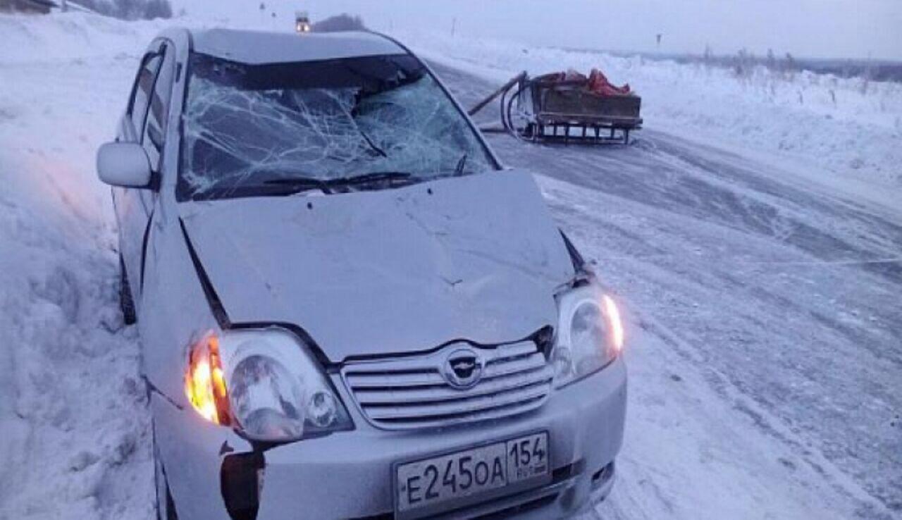 Под Новосибирском конь примерз касфальту испровоцировал ДТП
