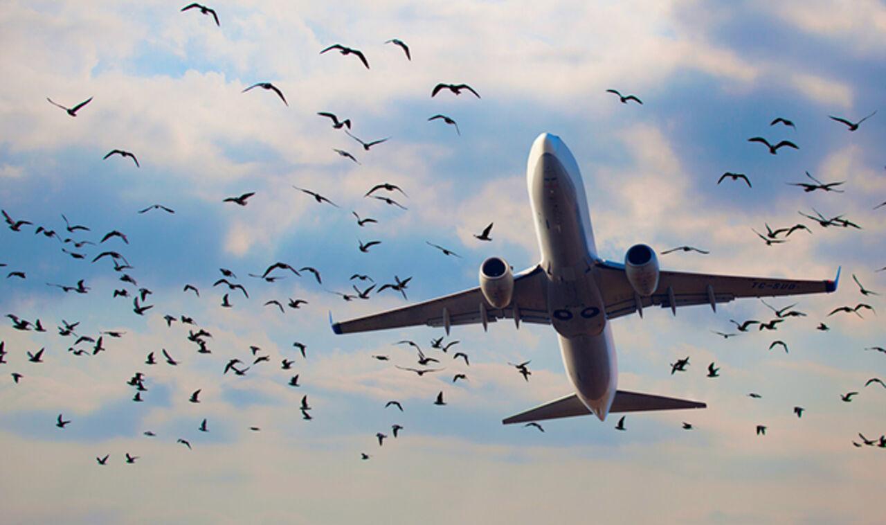 ВСимферополе несколько рейсов «Уральских авиалиний» задержаны из-за атаки птиц