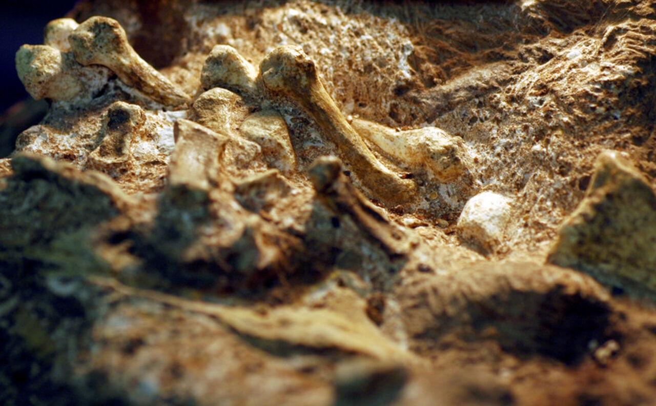 14 тыс. лет назад люди дружили сдревними карликами