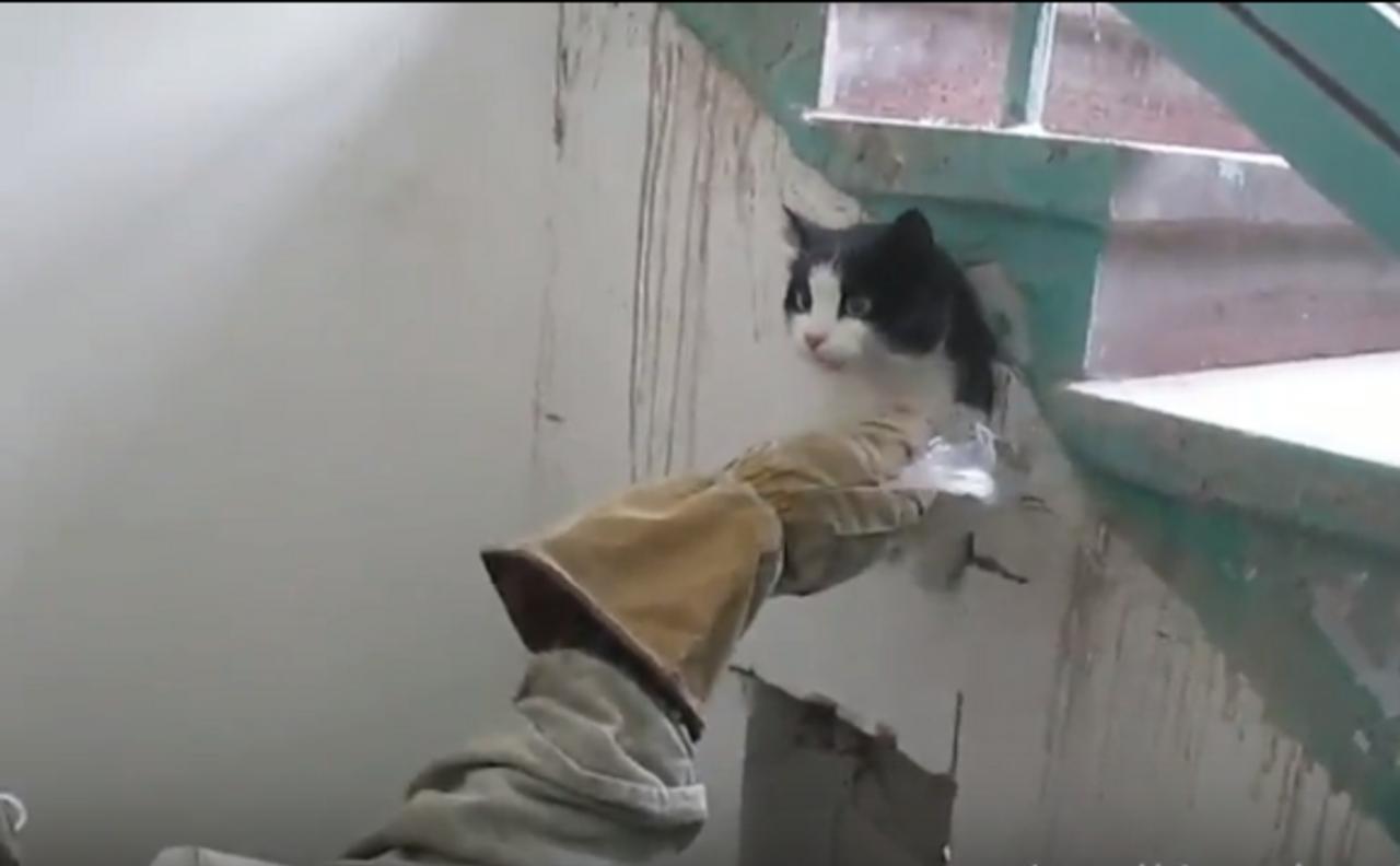 Cотрудники экстренных служб вызволили замурованного под лестницей кота
