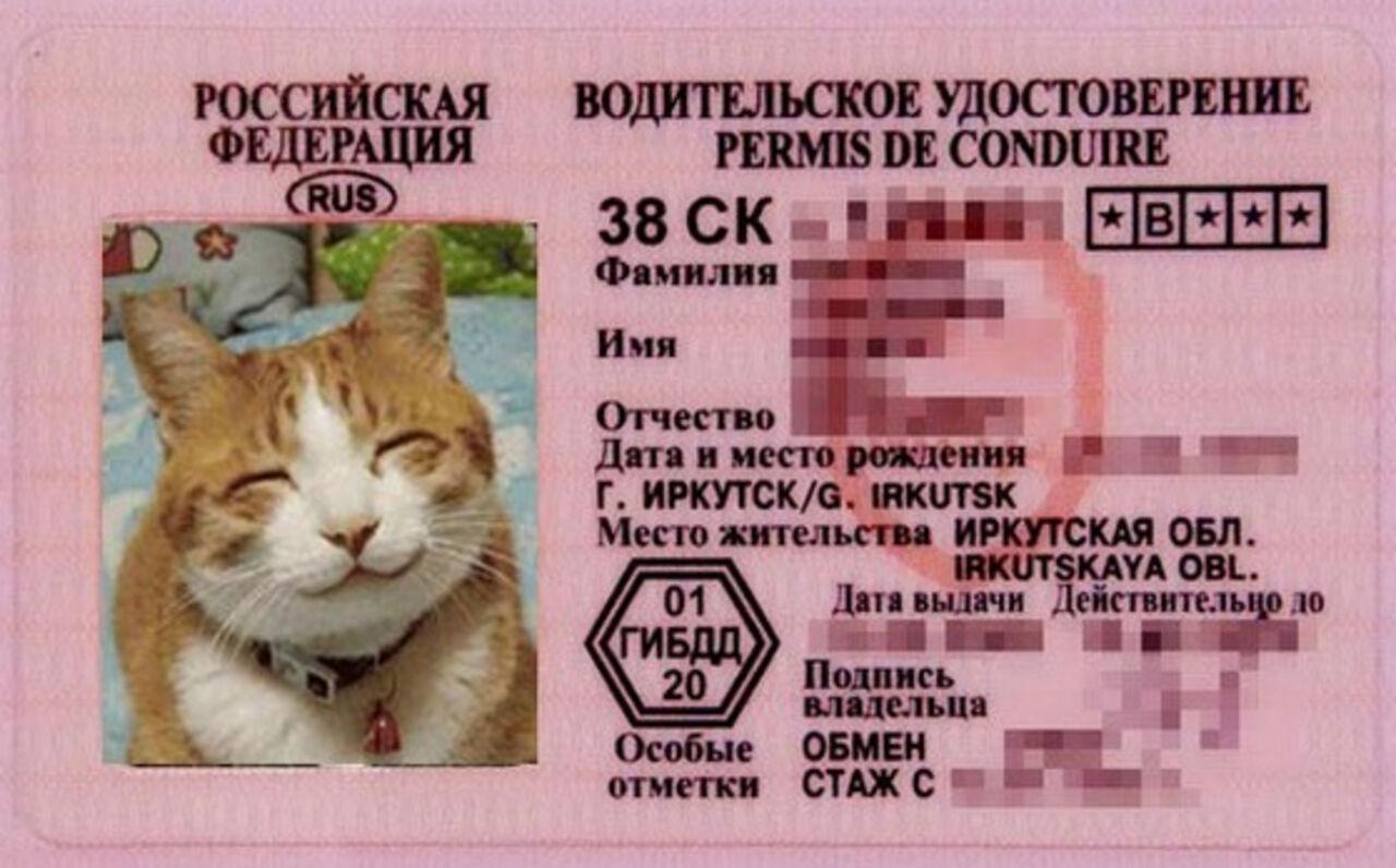 Поздравления с водительскими правами