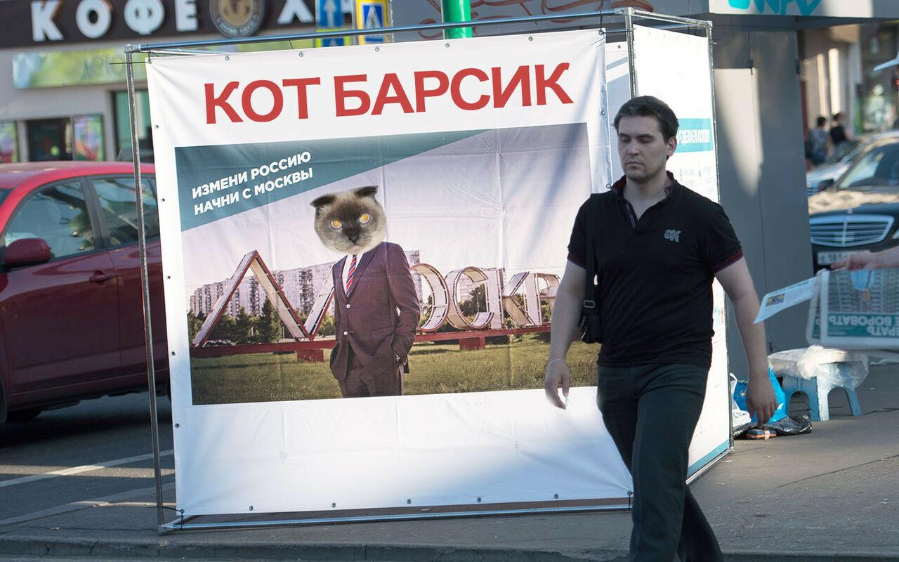 Кот Барсик изСибири принял решение «идти» впрезиденты РФ