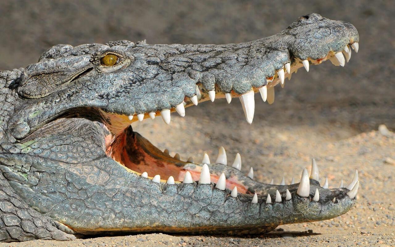 ВМалайзии крокодил съел рыбака