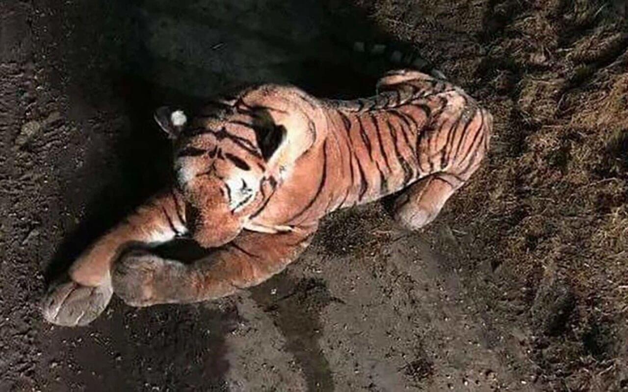 Игрушечный тигр поверг вужас фермера иполицию Шотландии