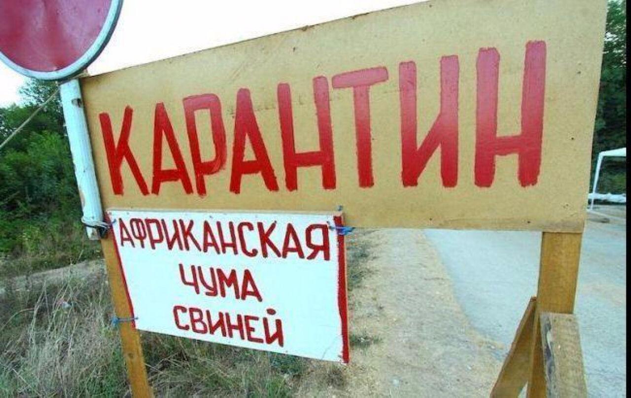 Карантин из-за АЧС введен вкрупном хозяйстве Нижегородской области