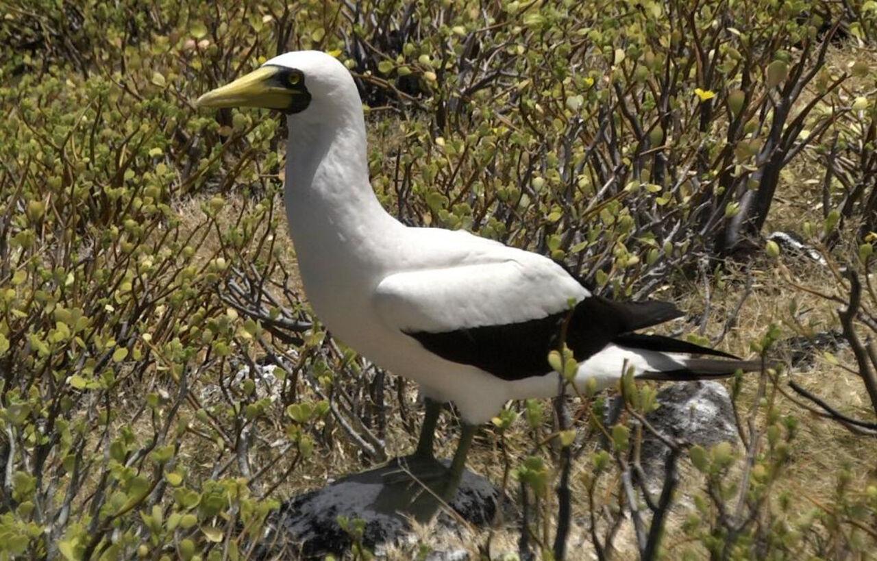 В новейшей Зеландии скончалась самая одинокая вмире птица