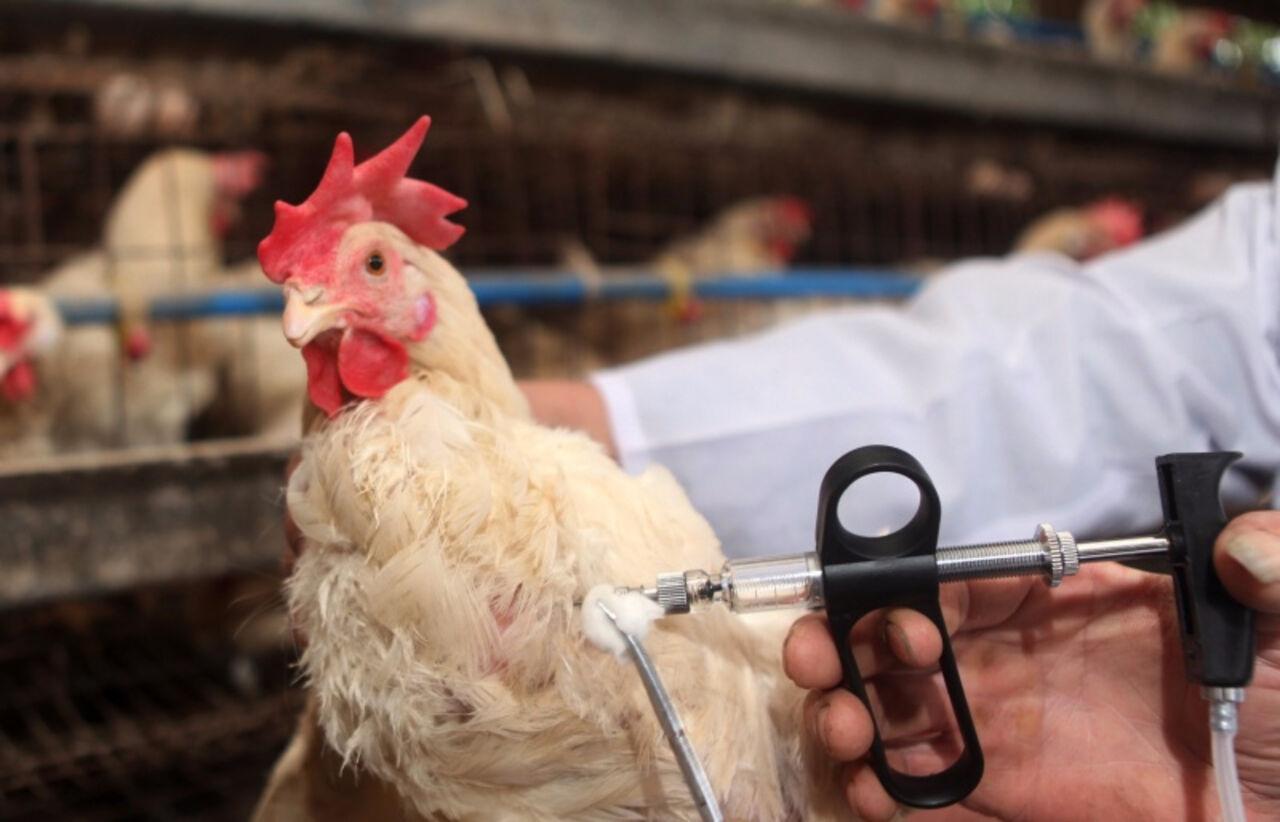 ВоФранции найден очаг опасного вируса птичьего гриппа