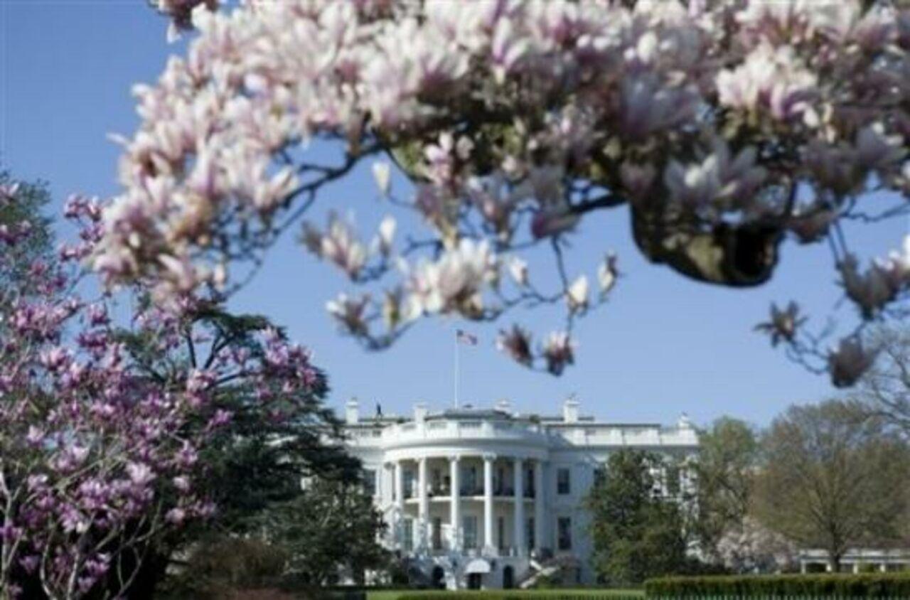 Супруга Трампа решила спилить самое старое дерево натерритории Белого дома