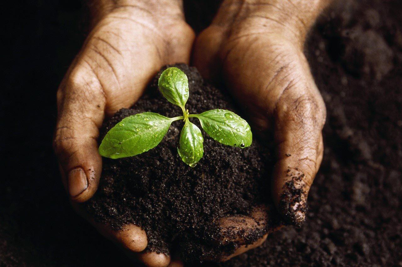 ВКГСХИ проверят сельхозпродукцию Кузбасса насоответствие мировым стандартам