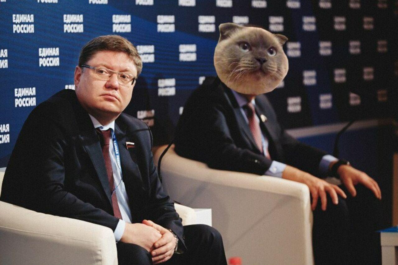 Барнульский кот Барсик желает стать президентом Российской Федерации