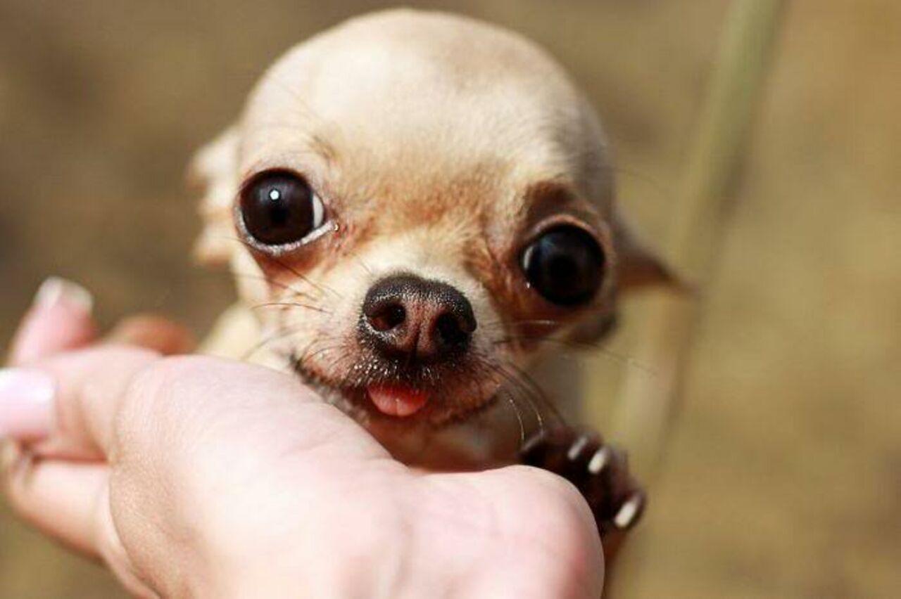 Ученые узнали, что вдружелюбии собак виноват «синдром эльфа»