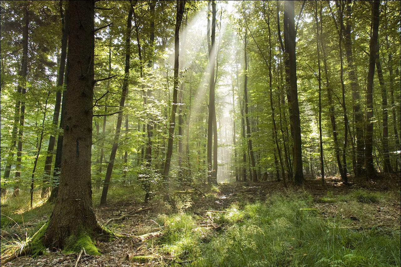 Искусственную почву для рекультивации земель изобрели ученые изКрасноярска