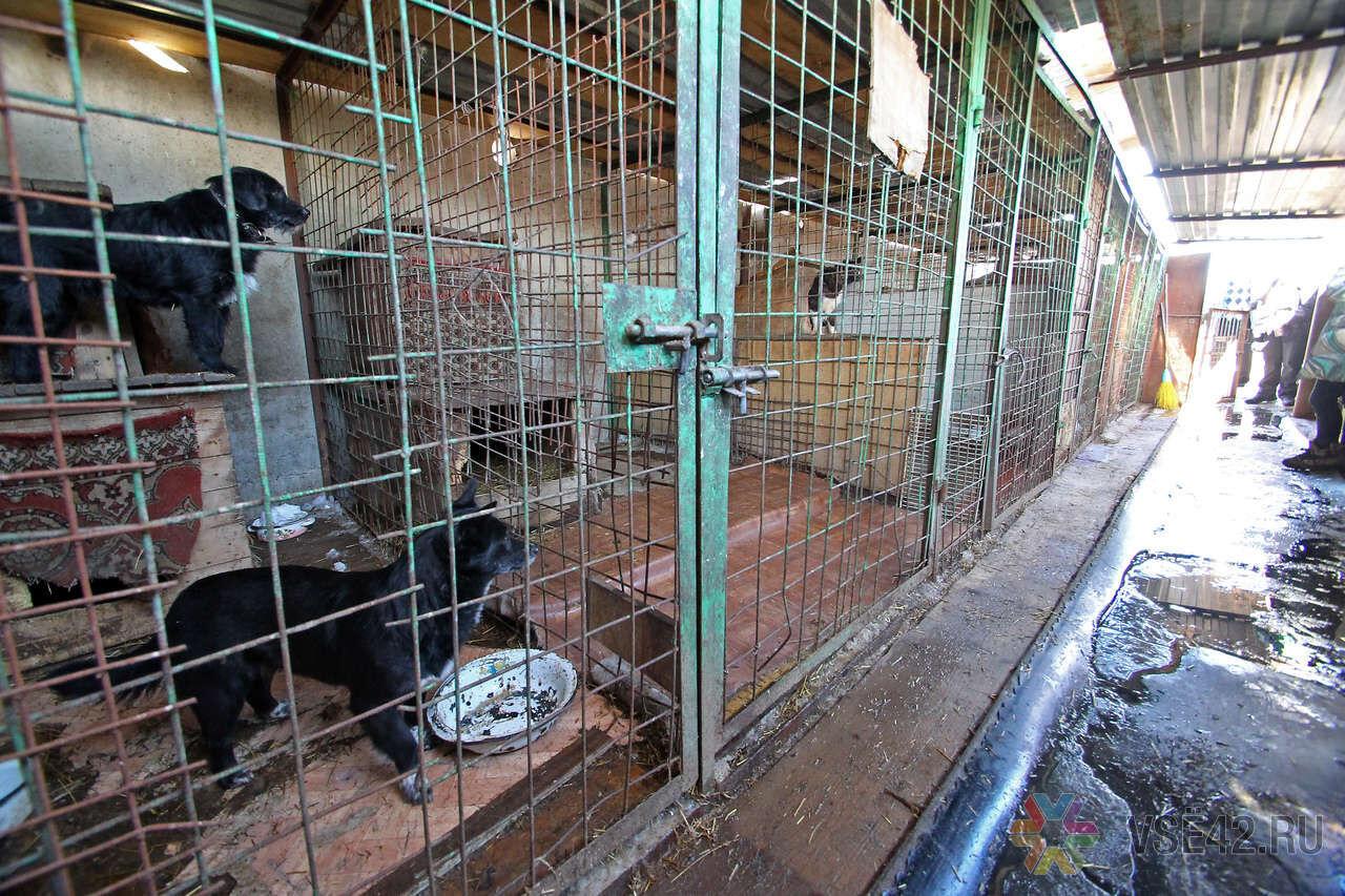 Приют для животных своими руками 813