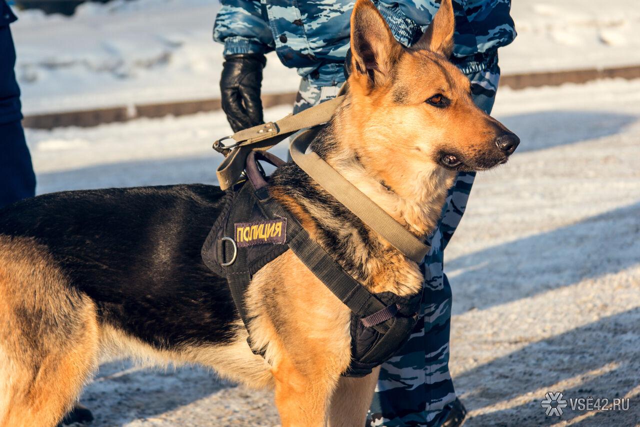 ВКемерове служебная собачка  несколько кмпреследовала правонарушителя