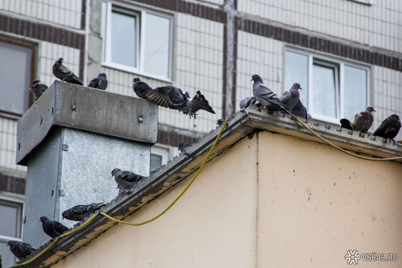 ВОмске наголову женщине упал кусок газобетона  сремонтируемой крыши