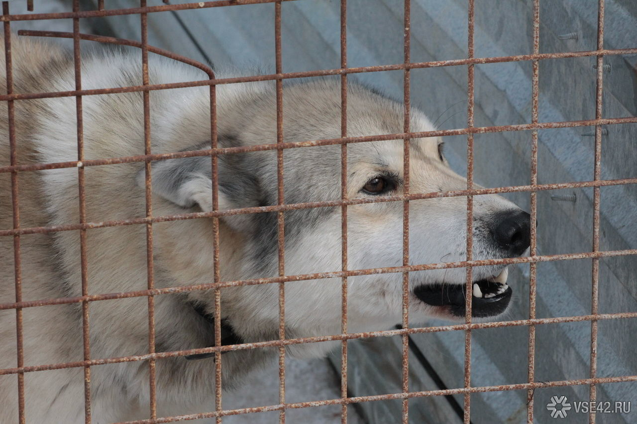 Заполгода вКоми животные покусали практически полторы тысячи человек
