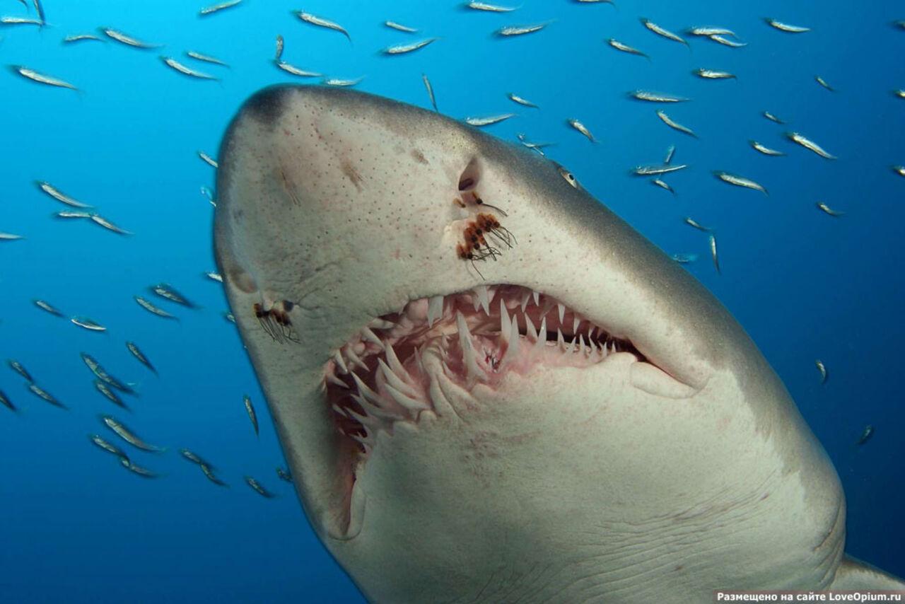Акула откусила пенис 7 фотография