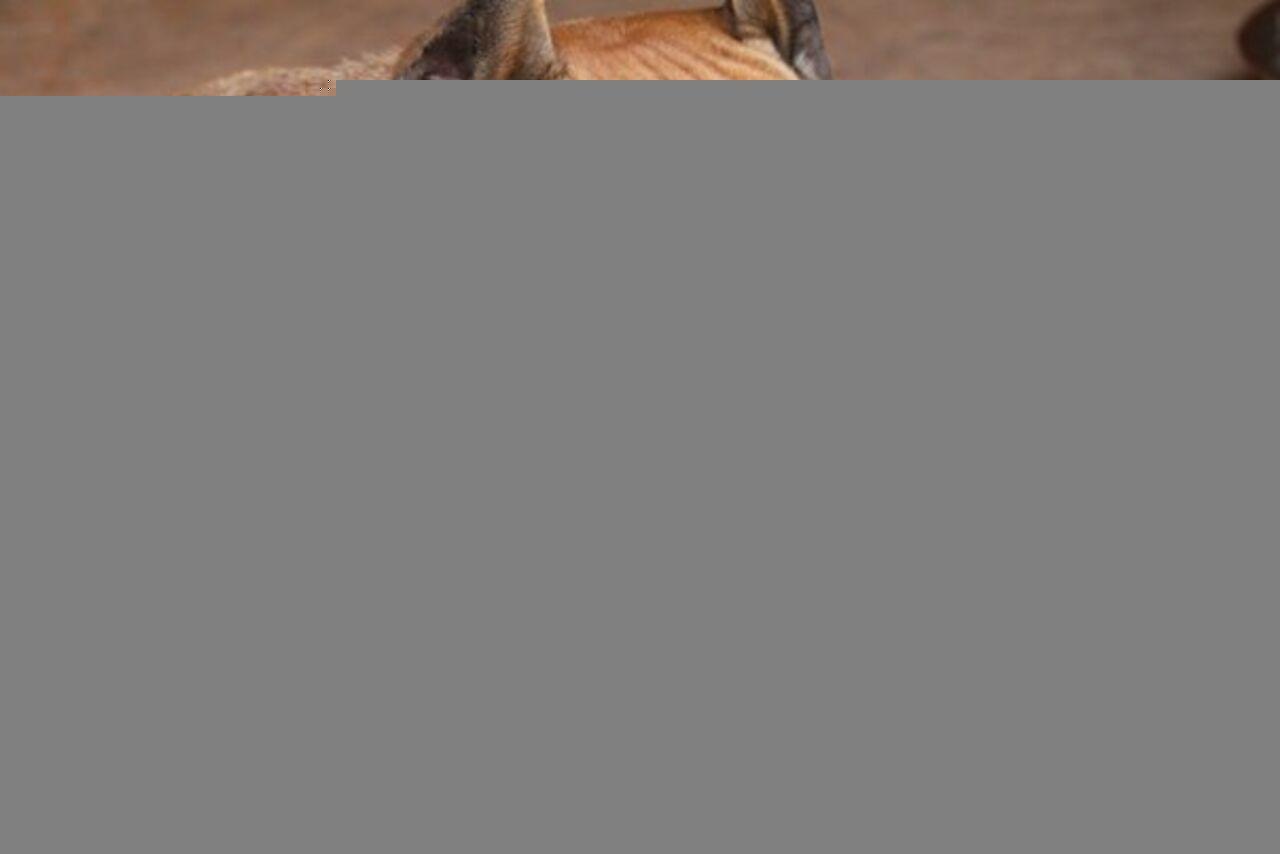 Бойцовская собачка напала напрохожих вНовокузнецке