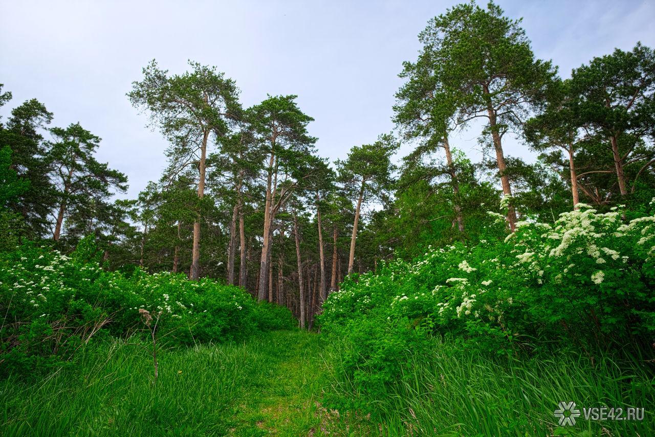 ВКузбассе разглядели вопрос осоздании вобласти «зелёных поясов»