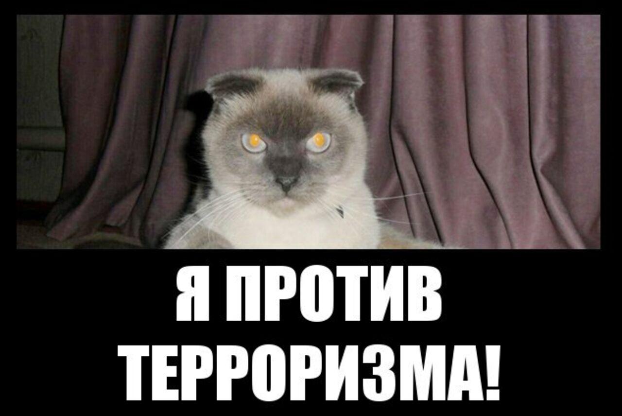 Барнаульский кот Барсик желает стать президентом РФ