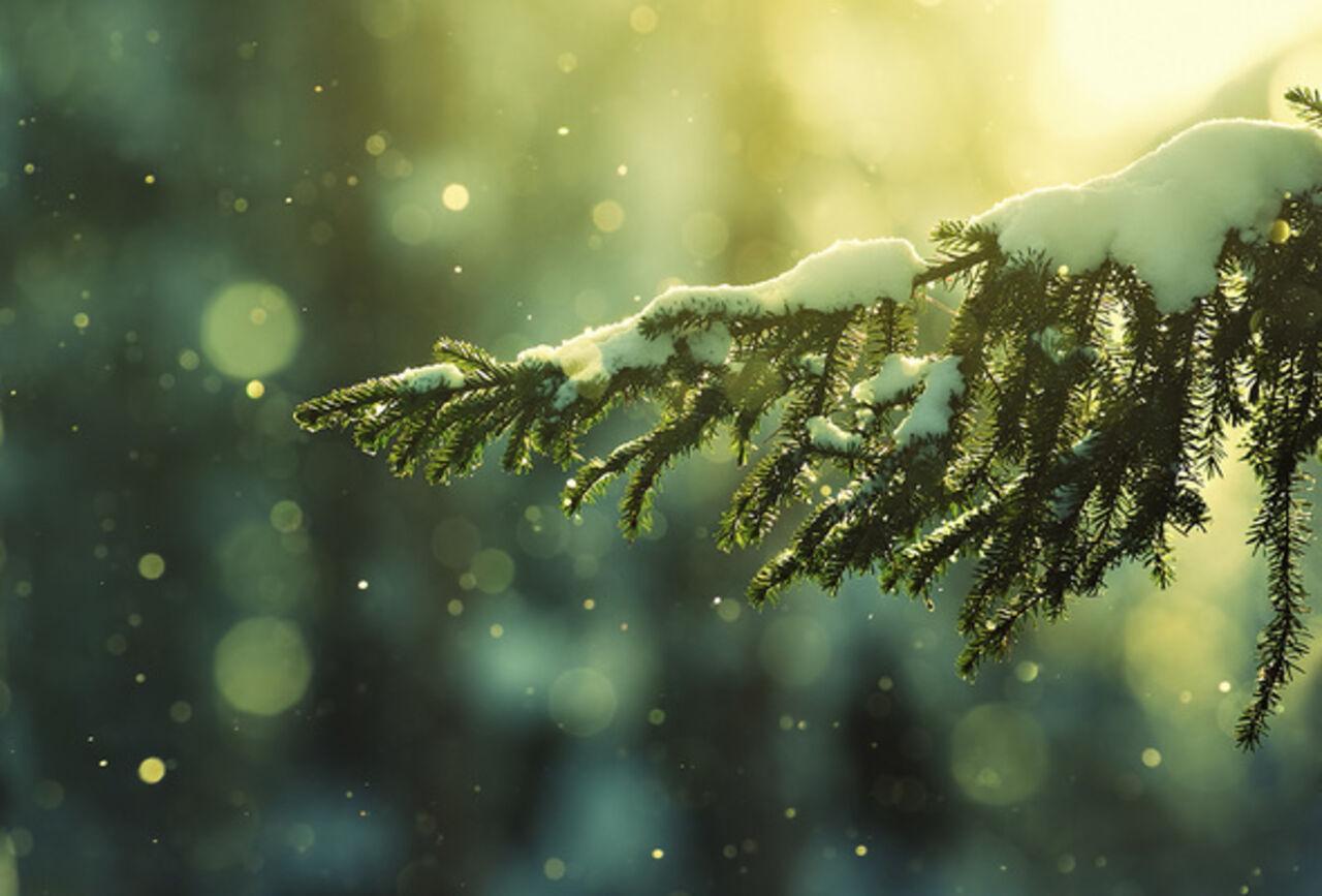 Кузбассовцев предупредили об рискованных новогодних ёлках