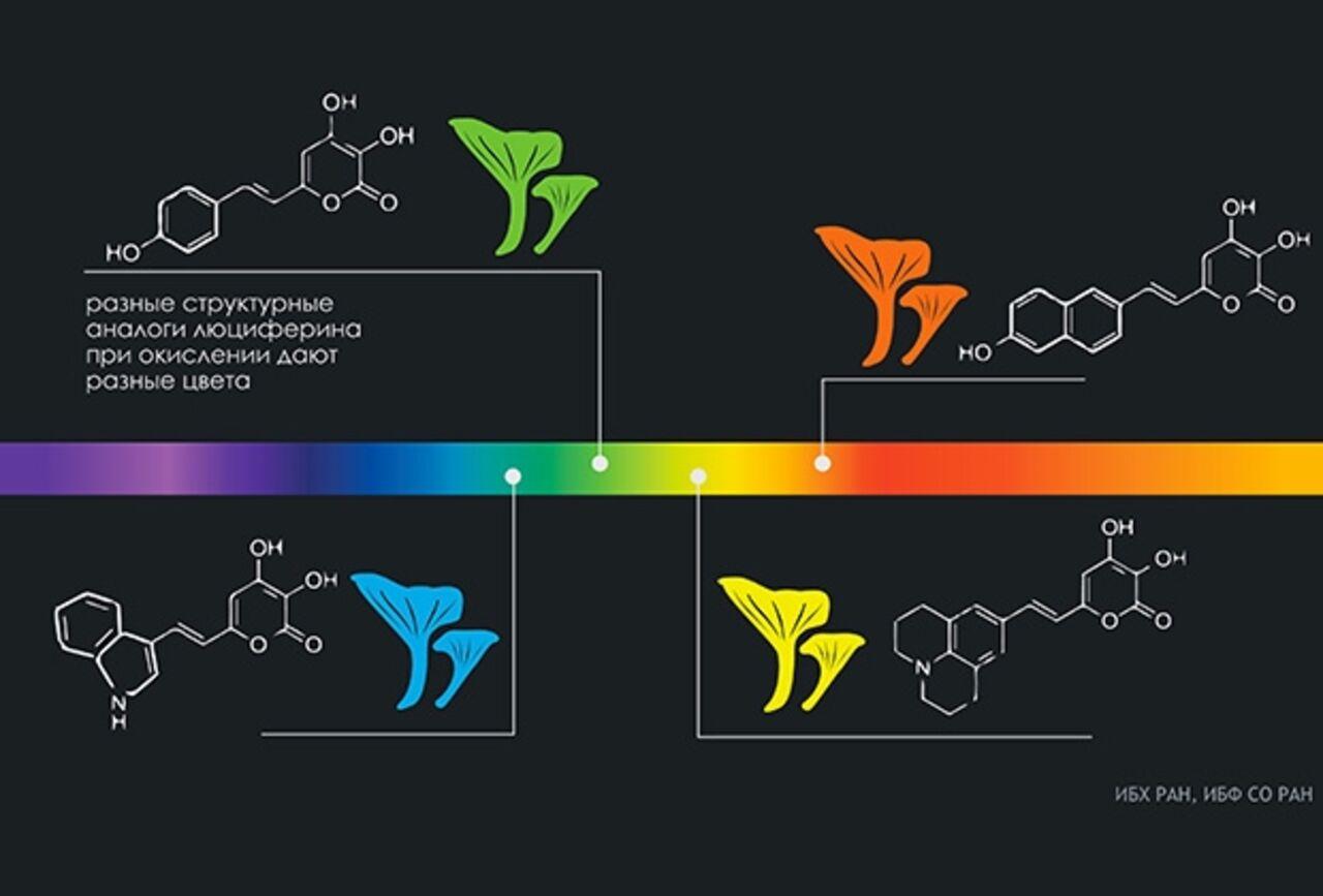 Генетики из России в ходе экспериментов получили грибы меняющие свой цвет на разнообразные оттенки