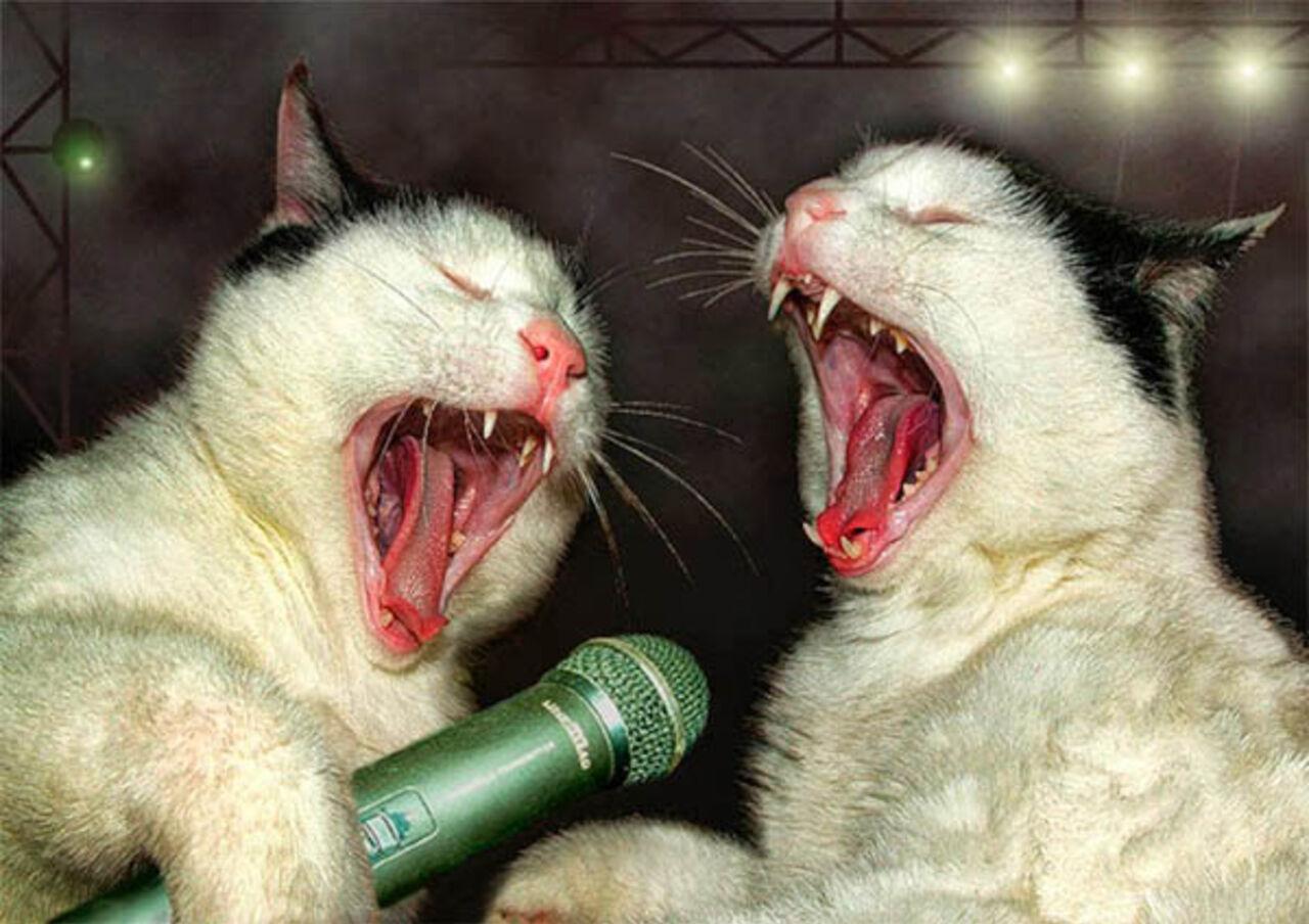 Шведские ученые приняли решение  обучать  язык кошек