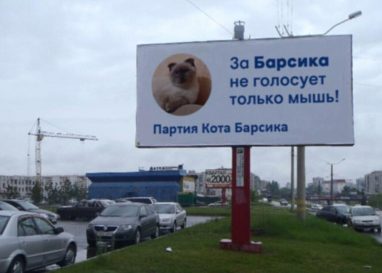 Барнаульский кот Барсик хочет баллотироваться напост президента Российской Федерации