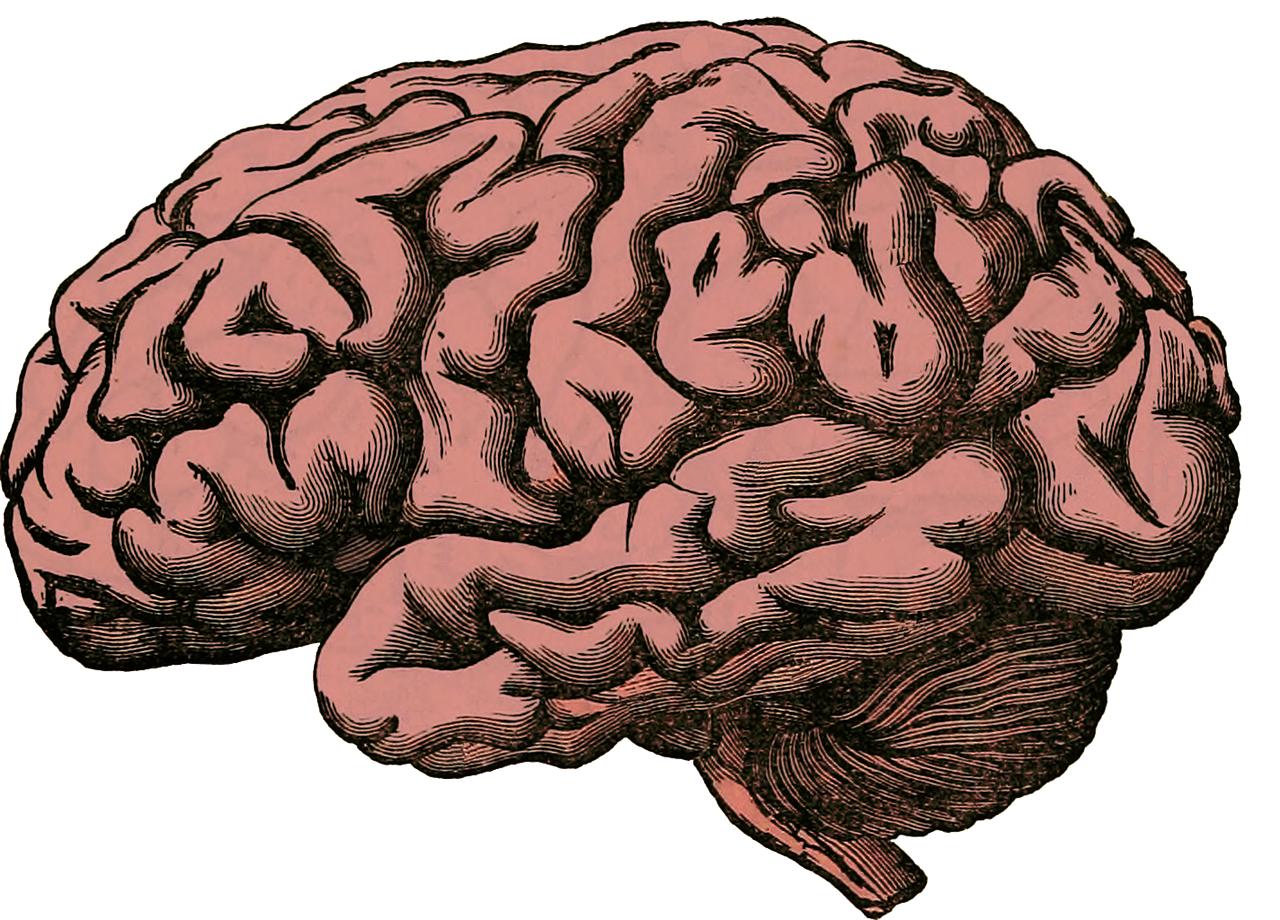 Группа ученых из университета Лафборо в Лестершире пришла к выводу о зависимости массы мозга от наличия лишних килограммов в теле человек