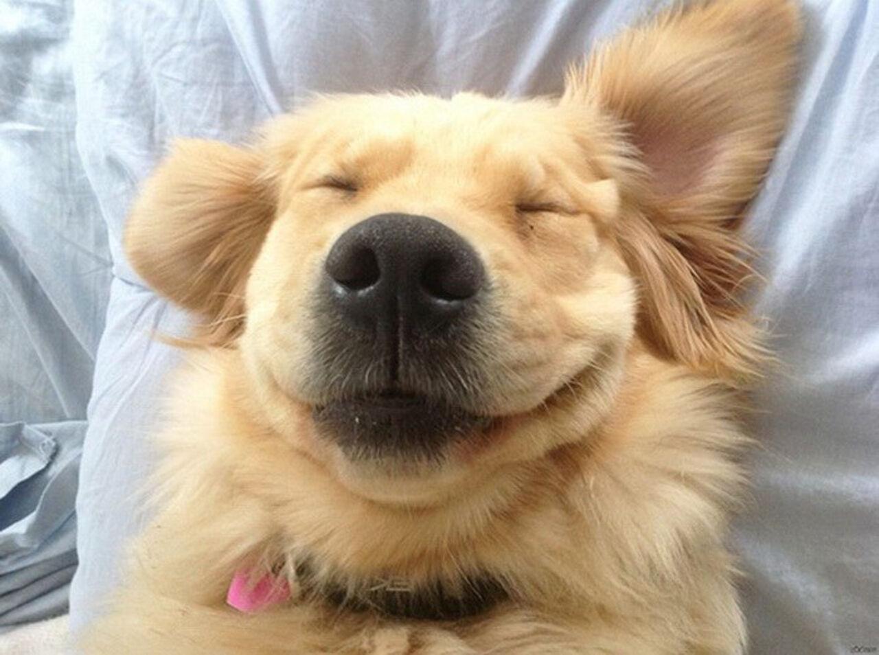 Собачка вМичигане получила пособие побезработице в $360